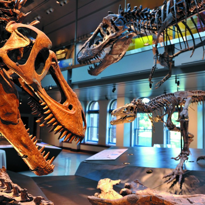Photograph of the Dino Hall exhibit