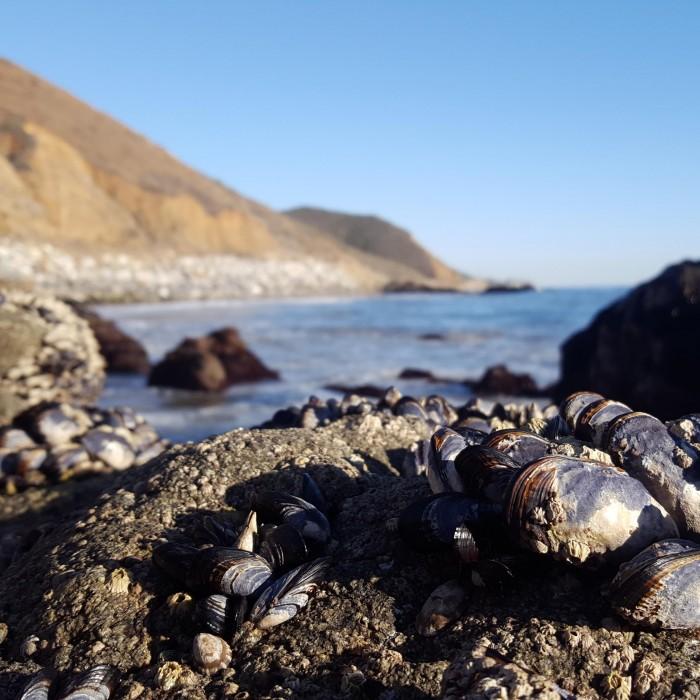 southern california coast image