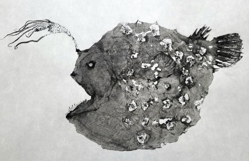Pacific footballfish print Dwight Hwang